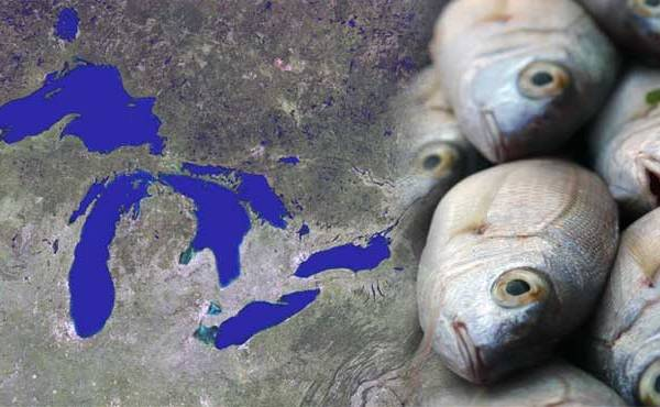Fish farming in Great Lakes_130817