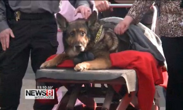 Connecticut police dog put down after final squad car ride_135841