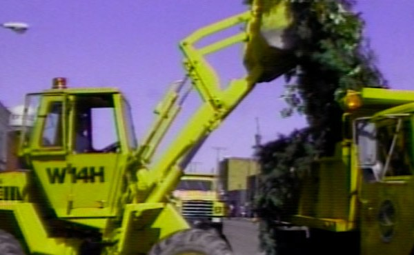 Tree-Cleanup_142805