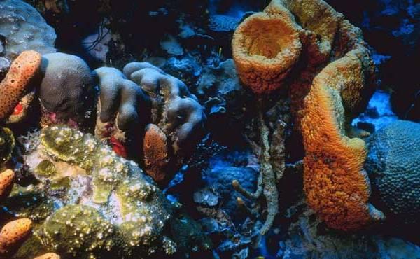 Coral reef generic_153380