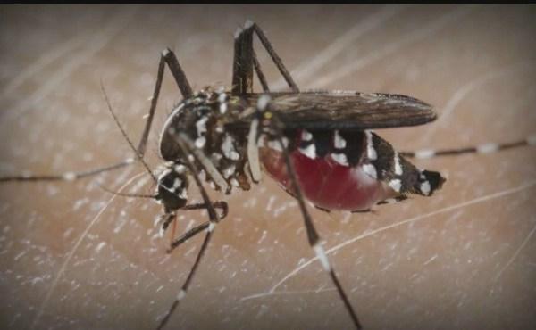 mosquito generic_201059