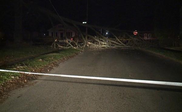 Judson tree down_214154