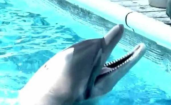 a-dolphin-in-a-tank-at-the-institute-for-marine-mammal-studies-in-gulfport-mississippi_218492