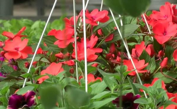 Spring planting_219169