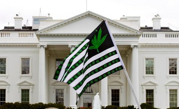 marijuana-flag_224571