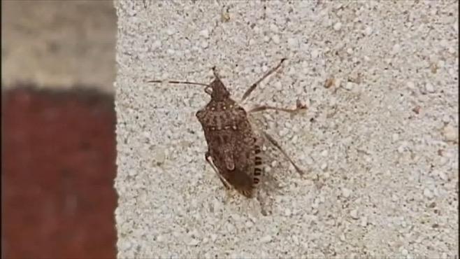 Stink bugs_260452