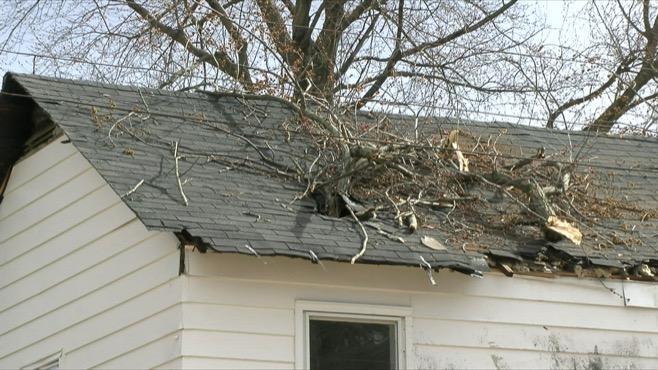 Niles tree on house_313255