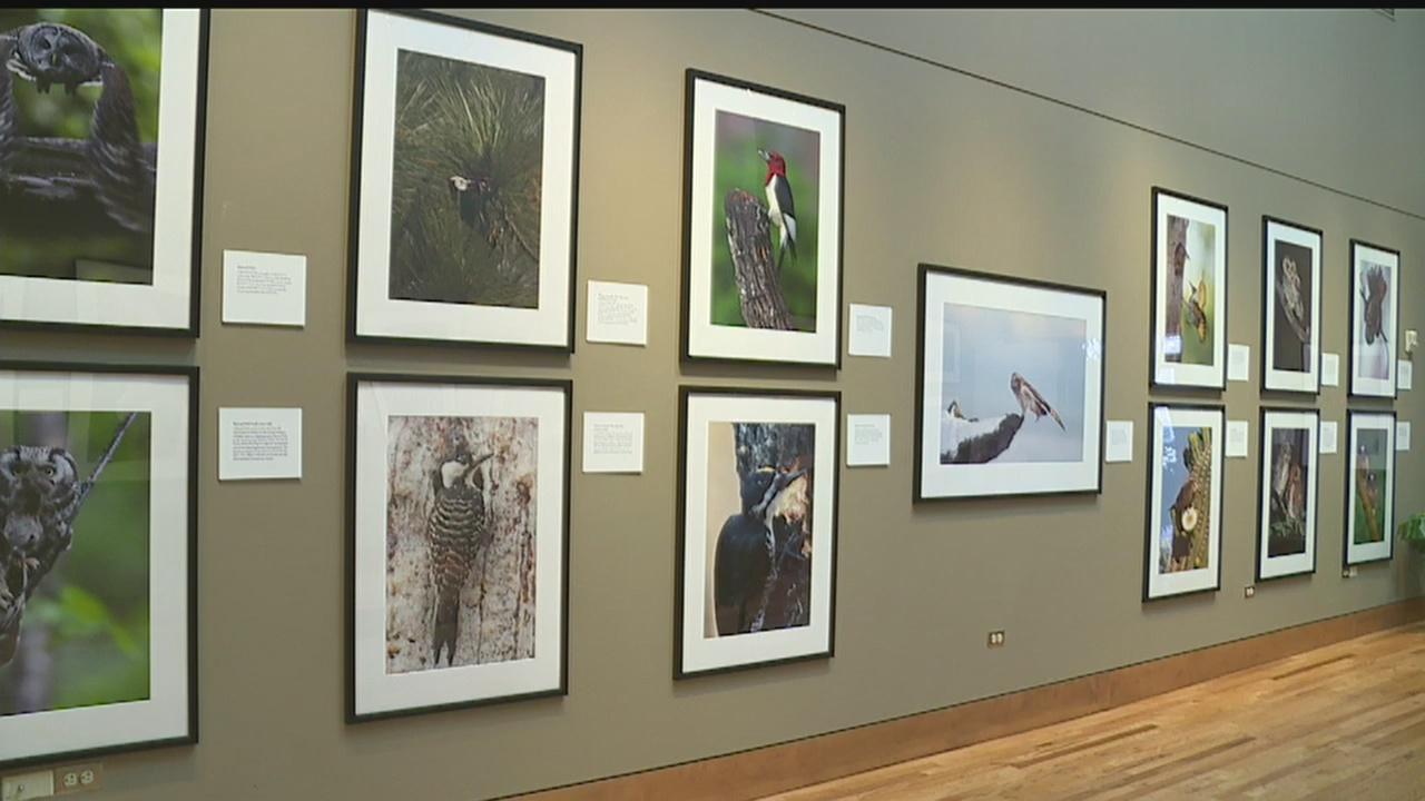 Birds photo exhibit_314579