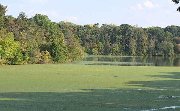 mill creek lake newport youngstown_428500
