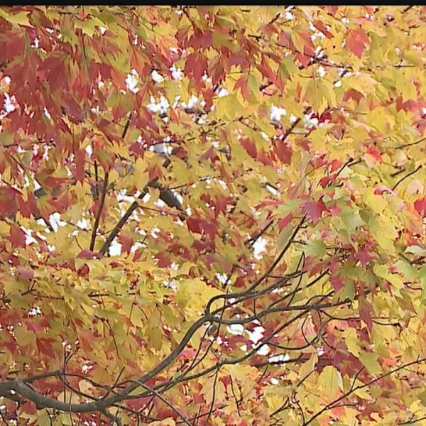 A look around the Mahoning Valley at this year's Fall foliage
