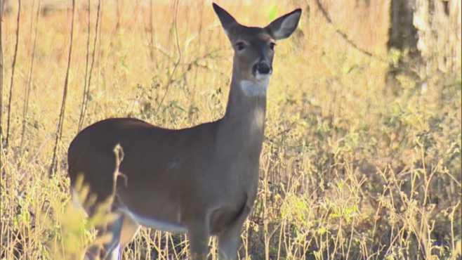 deer generic_427804