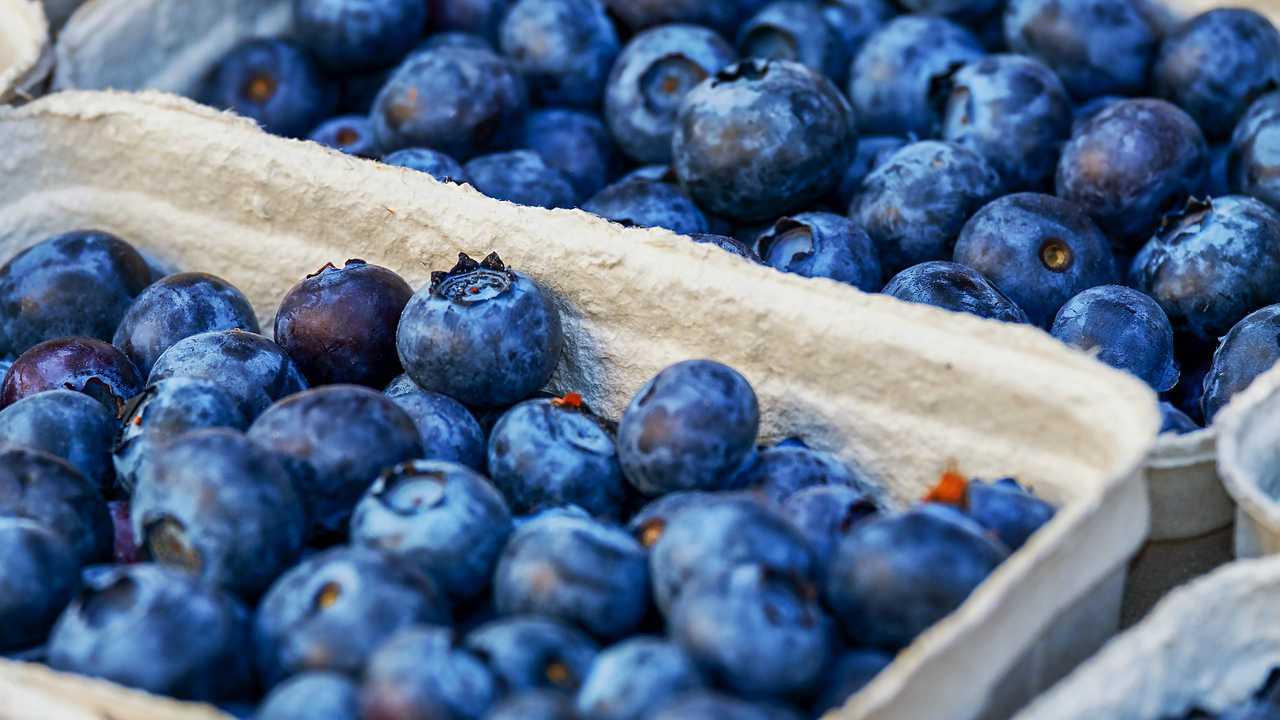 Blueberries, food, generic