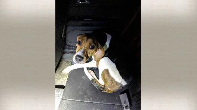 dog-rescue-mecca-4-_1540402101374.jpg