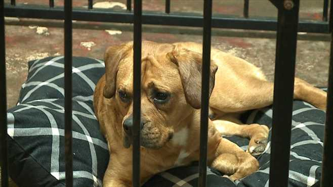 New Lease on Life WV Rescue Dogs 5