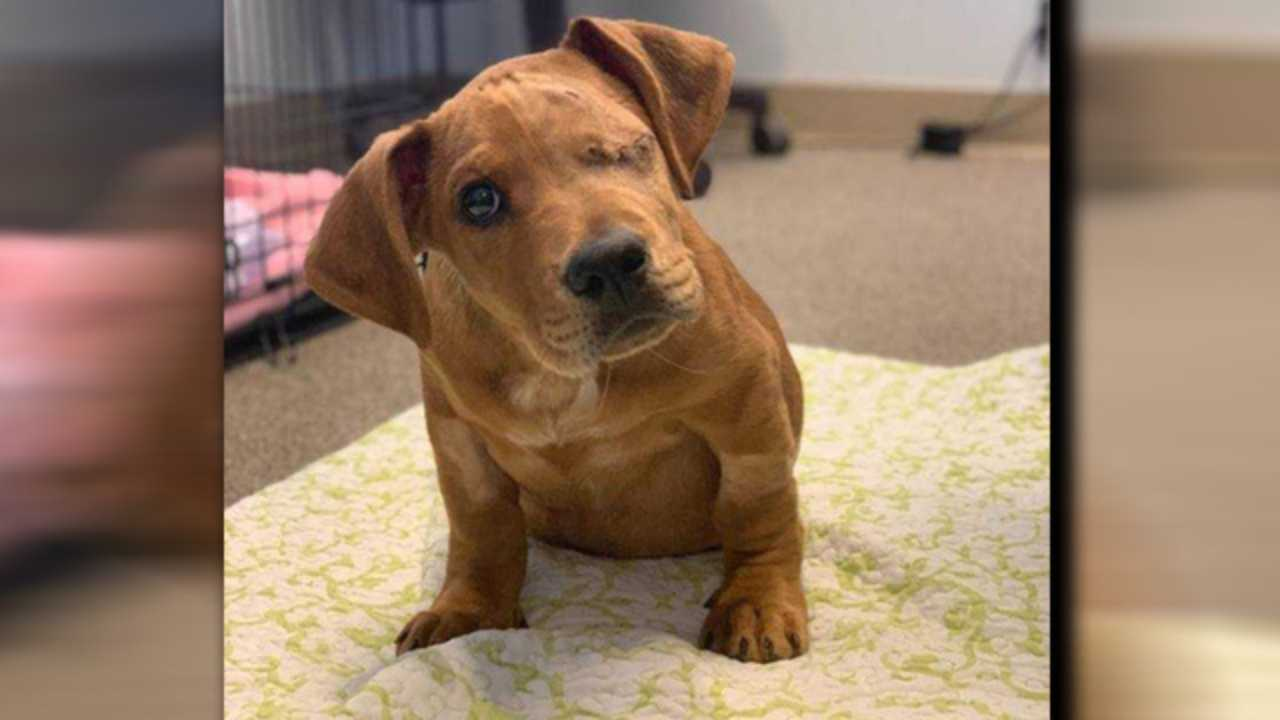 Abandoned puppy hit by train in Ohio