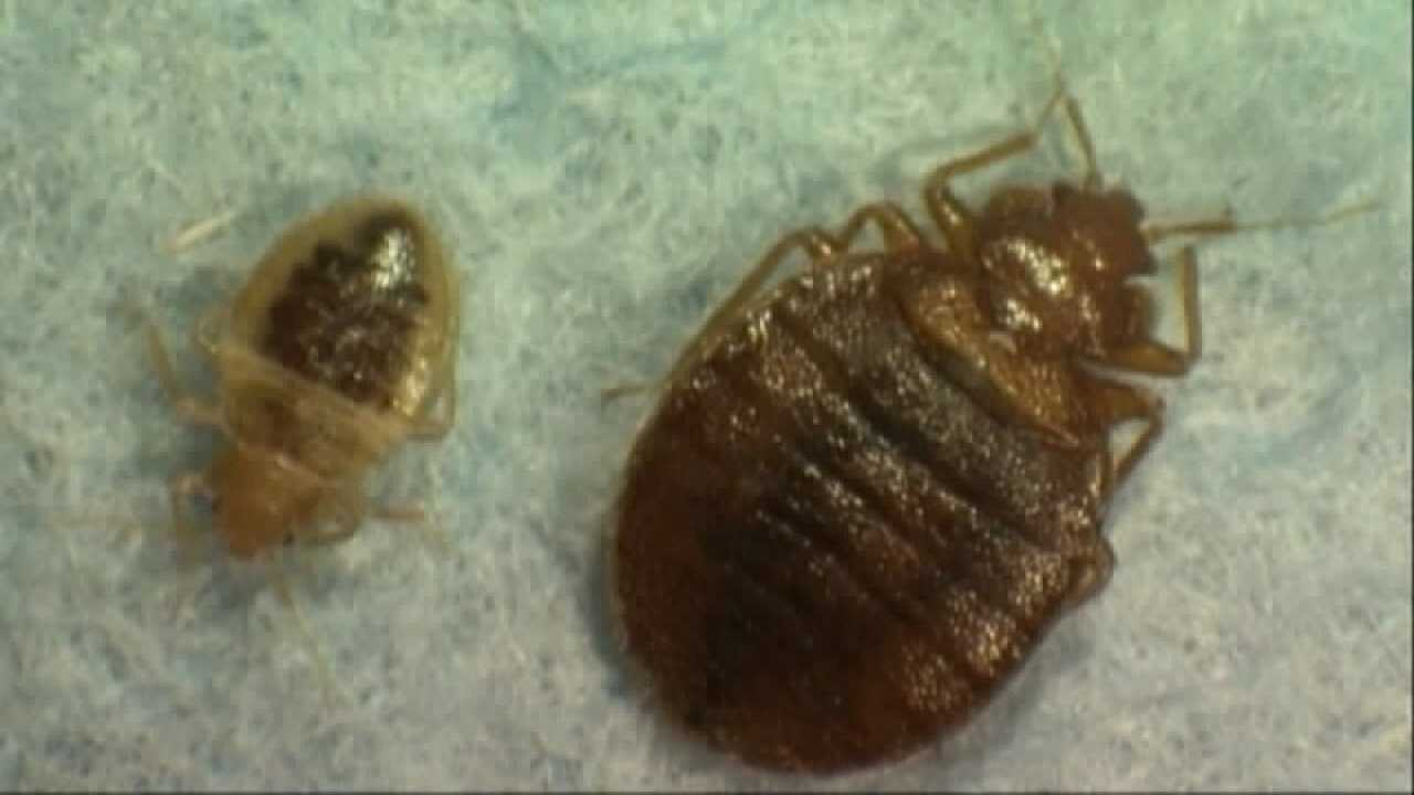 Bed bugs generic