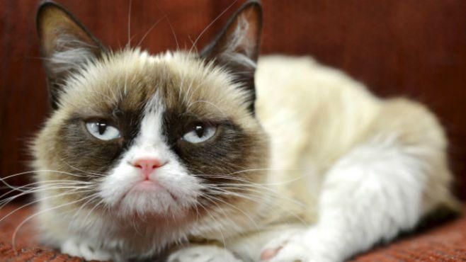 Internet Sensation Grumpy Cat Dies