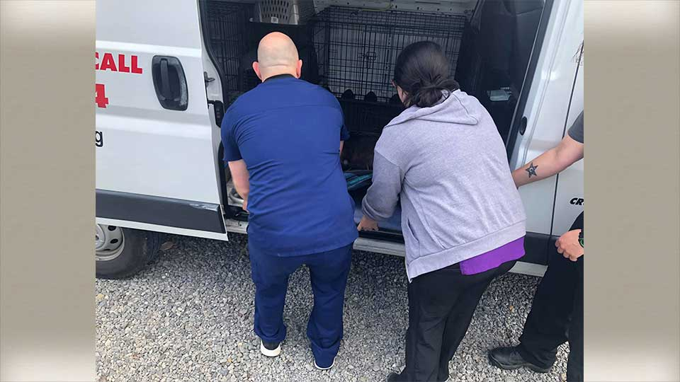 Humane agents with Animal Charity helped rescue a dog that was nonresponsive because of heatstroke.