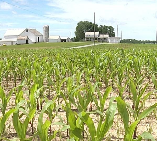 Farm, crop generic