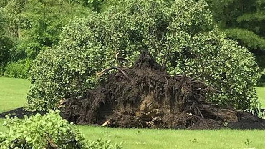 Tree uprooted in the Willow Brook Condos in Warren, Ohio