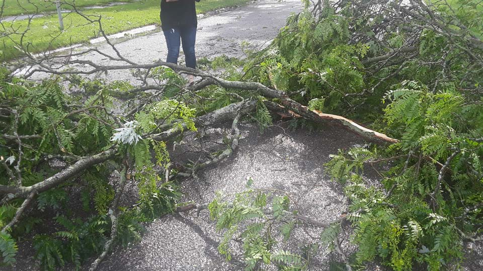 Severe weather damage on Elmhill and Tod Ave.