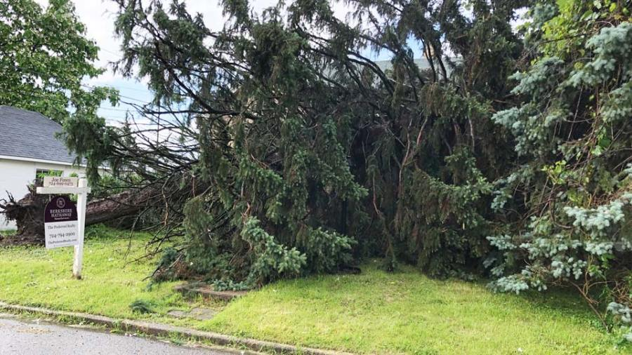 Pine tree fell on a house during the severe weather in Sharon, PA.
