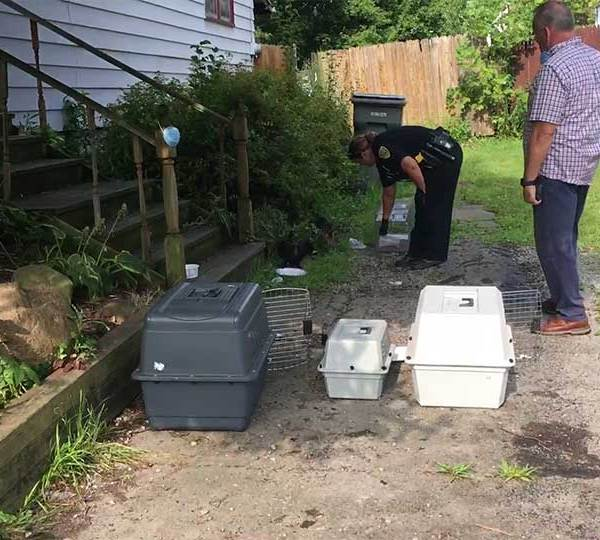 Humane agents removed dozens of cats from a house on Youngstown's south side.