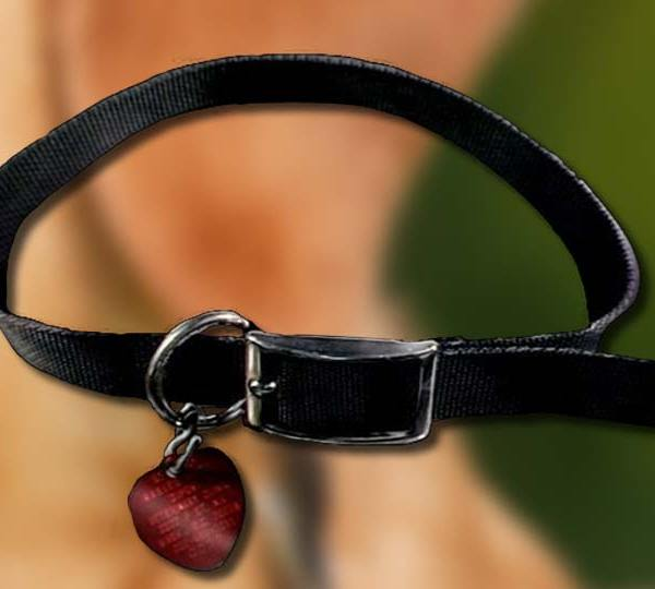 A dog collar sitting in front of a dog blurred in the background