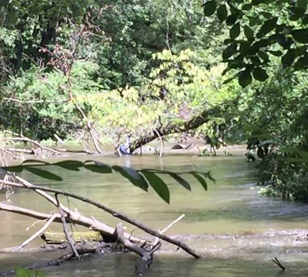 Police and fire crews rescued a family that was trapped in the Shenango River in Greenville on Tuesday afternoon.