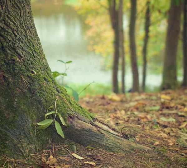 Trees, Wildlife, Nature Generic
