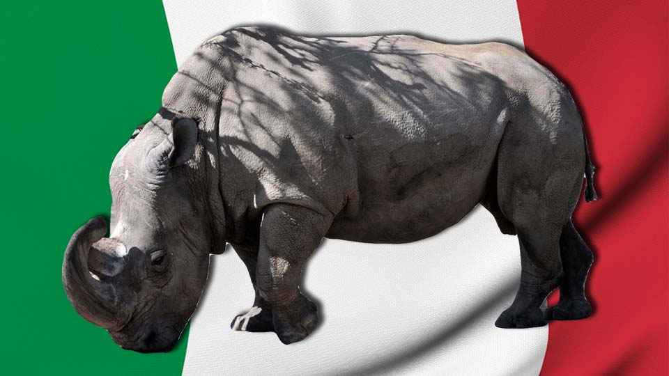 Italy White Rhino Breeding
