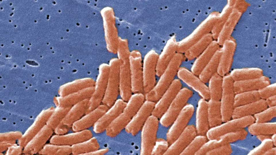The Centers for Disease Control and Prevention is warning about a new strain of salmonella that's resistant to antibiotics.