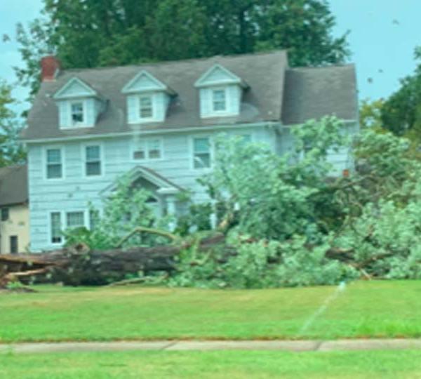 Tree down in front of home on East Market Street in Warren, Ohio.