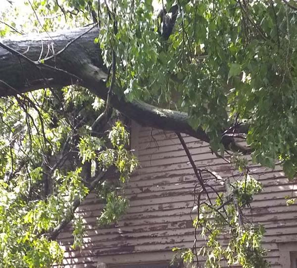 Tree on house in Warren
