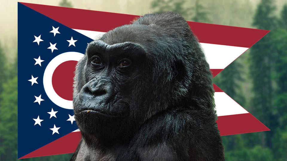 Ohio Zoo gets Gorillas