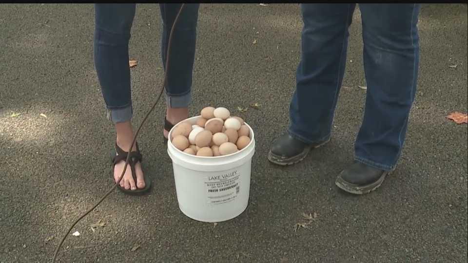 Canfield Fair Poultry Barn eggs