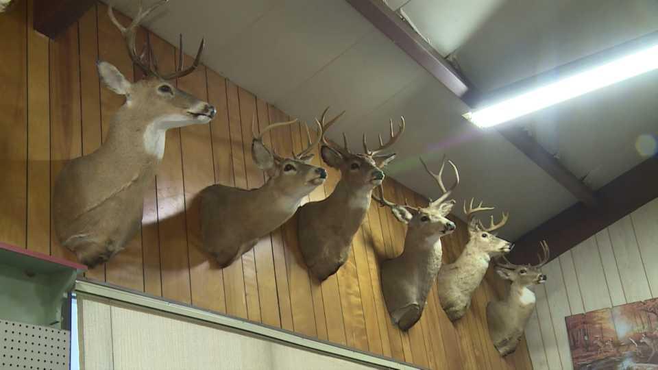 Deer hunting, deer heads