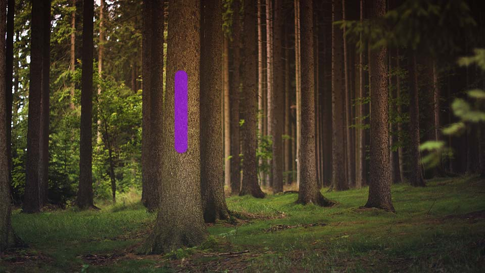 Pennsylvania passes 'purple paint' law to warn trespassers
