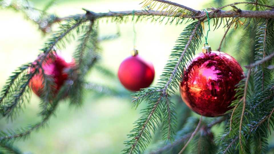 Christmas trees, pine trees generic
