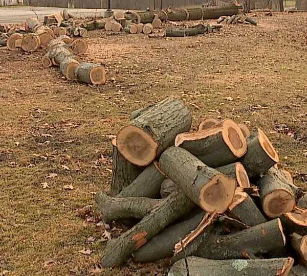 Trees cut down in Women's Park in Warren