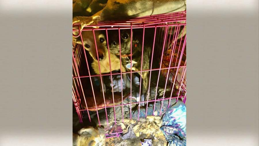 Austintown animal neglect