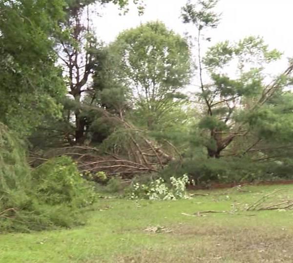 The tornado took down more than 300 trees at Yankee Run Golf Course.