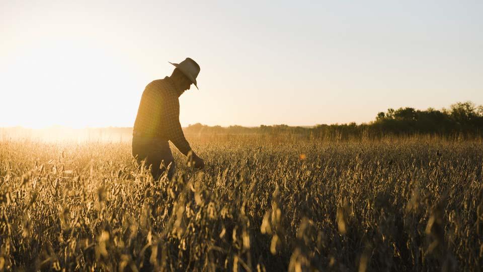 Generic farming image