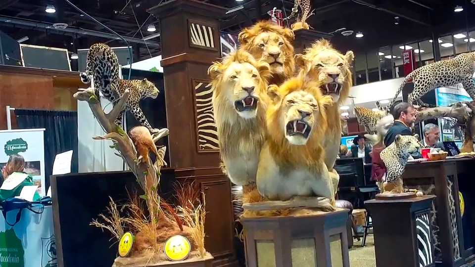 Trophy hunting convention in Reno, Nevada.