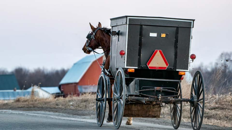Amish buggy generic