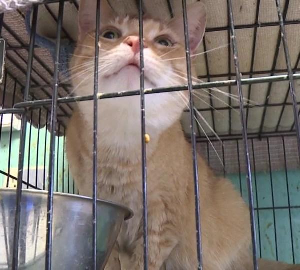 Cat, animal shelter