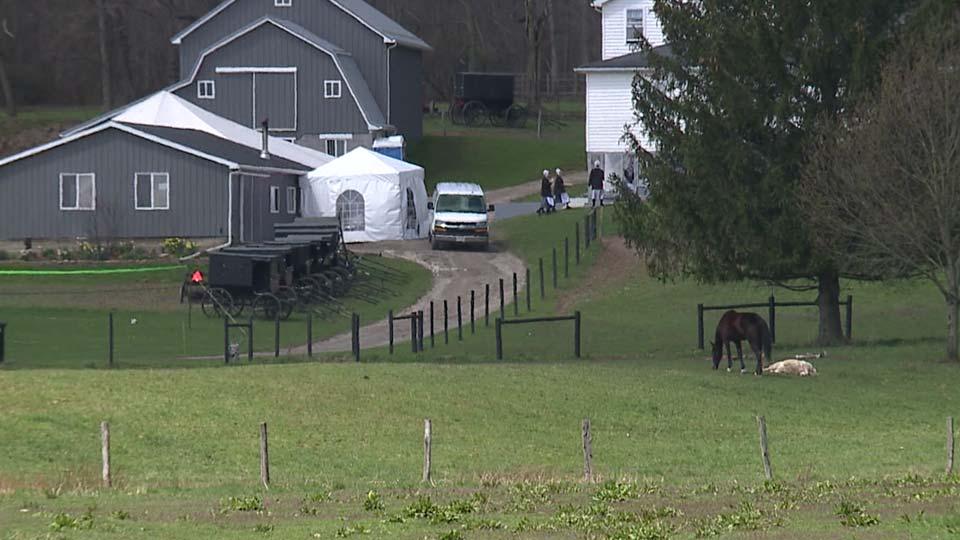 Amish wedding, social distancing