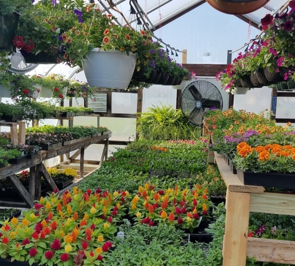 The plants at Georgetown FFA's greenhouse in Georgetown, Ohio, are thriving under the care of the school district's two ag ed teachers, Jamie Loudon and Pam McKinney.
