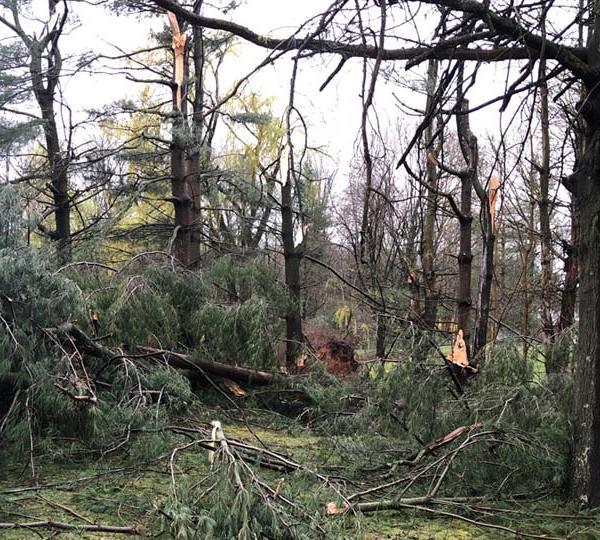 Leetonia storm damage, trees down