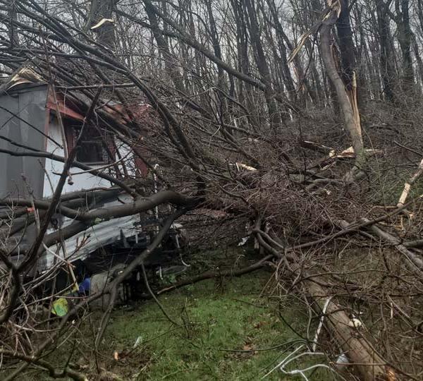 Trees down, Negley, Ohio
